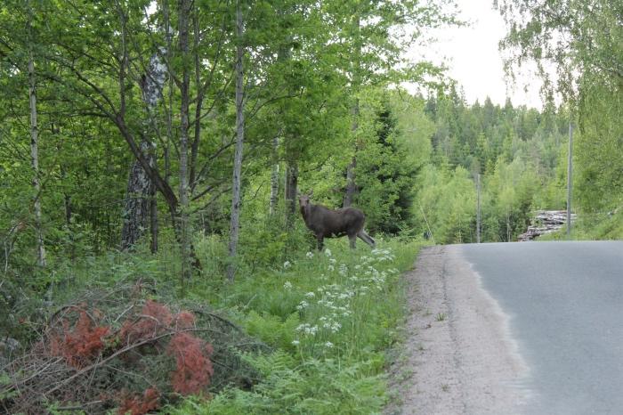 straat in Zweden